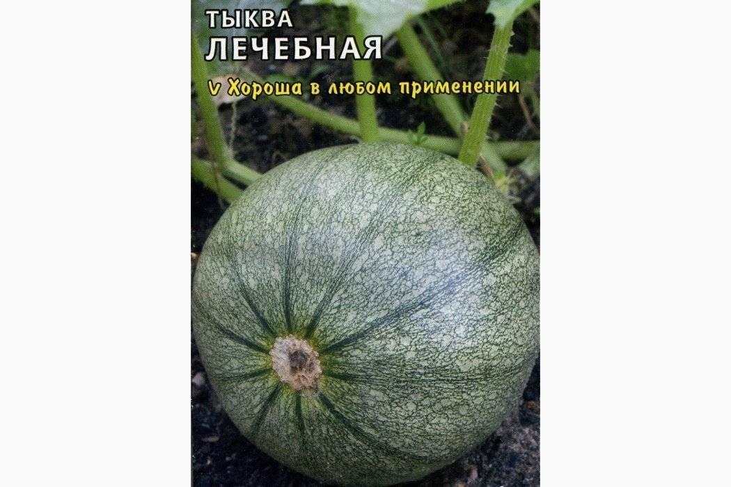 Тыква витаминная: описание и фото, отзывы, выращивание мускатного сорта