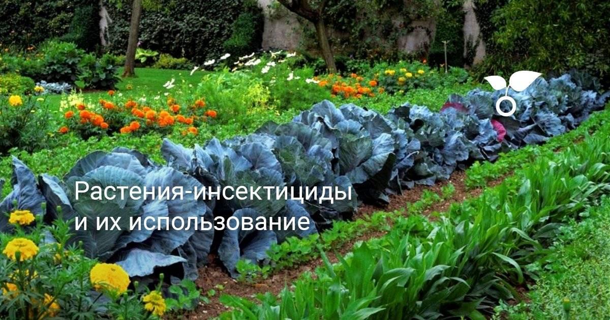 Топ 8 фунгицидов для комнатных растений