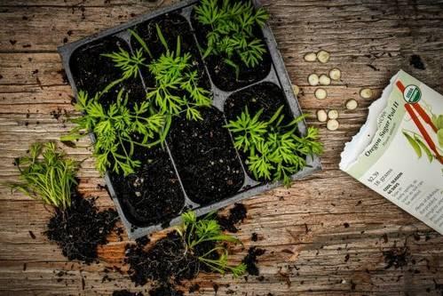 Лучшие стимуляторы роста растений: применение и характеристики
