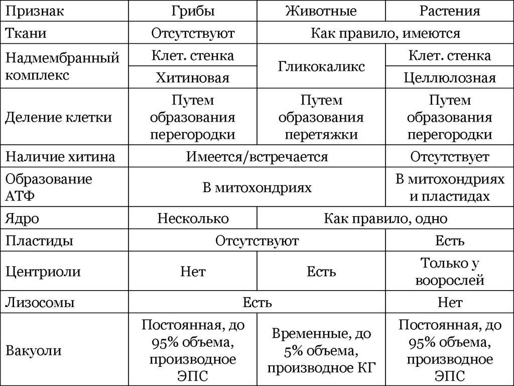 Каковы общие признаки грибов и чем они отличаются от растений и животных?   полезная информация для всех