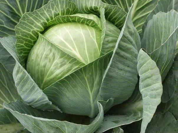 Мочевина (карбамид) — удобрение и защита растений, применение на огороде