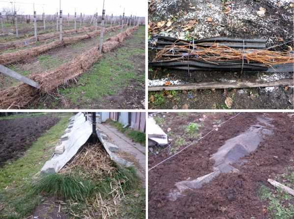 Как укрыть виноград на зиму в сибири: подготовка к укрытию, как и когда правильно утеплить, какими способами накрывать, как приготовить
