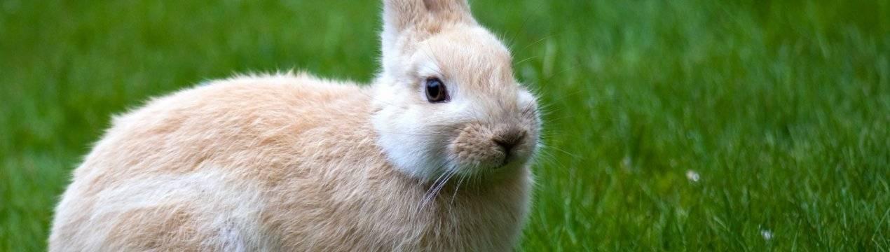 Правильное поение кроликов зимой на улице