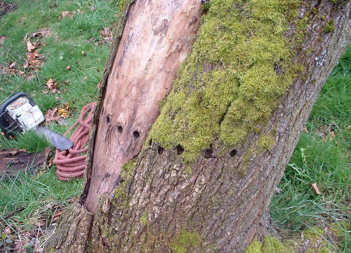 Чем полить дерево, чтобы оно погибло. чем полить дерево, чтобы оно быстро засохло? | дачная жизнь