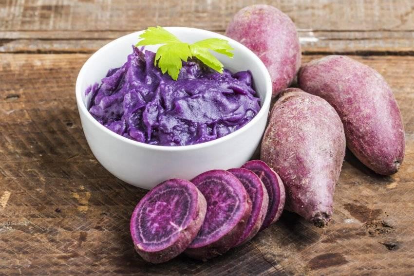 Сорт картофеля фиолетовый: характеристика и описание, отзывы, фото