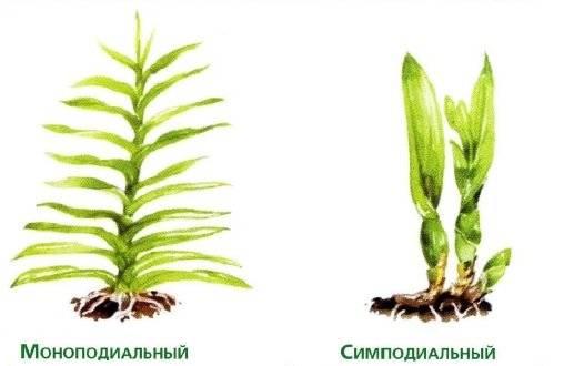 Строение орхидеи selo.guru — интернет портал о сельском хозяйстве
