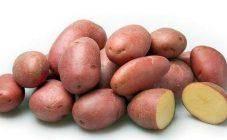 Сорт картофеля розалинд отзывы