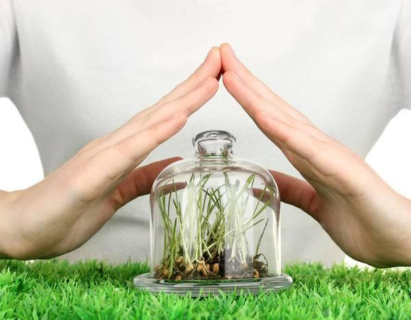 Защита растений от вредителей и болезней — химические средства