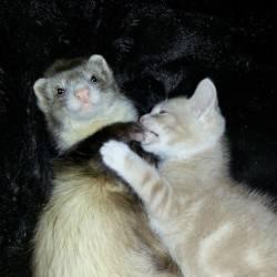 Какие породы собак уживаются и ладят с кошками