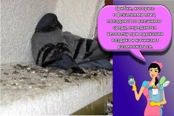 10 работающих средств против голубей на балконе