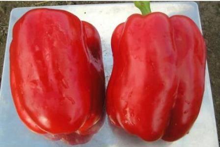 Перец рамиро: фото, видео, описание, выращивание сладкого перца