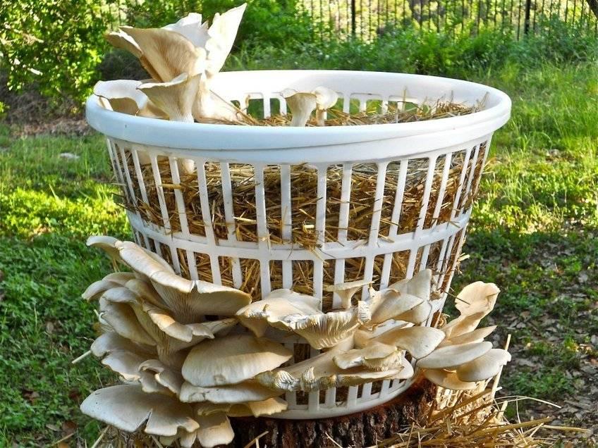 Выращивание грибов в домашних условиях: главные особенности