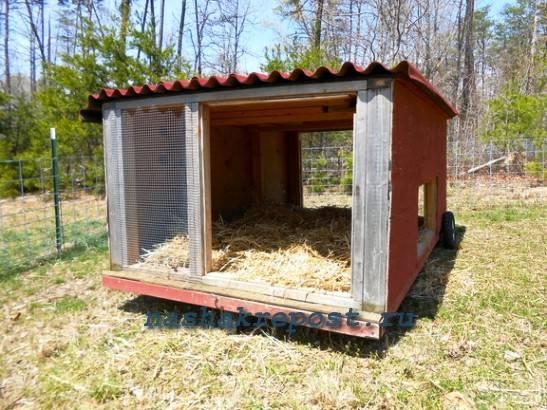 Как правильно построить сарай для свиней своими руками в домашних условиях без больших затрат: чертежи и фото