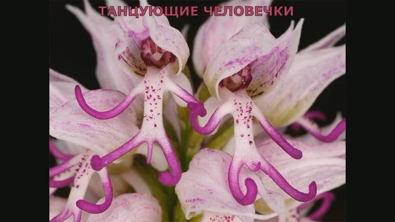 Есть ли цветы, похожие на орхидею – мнение опытных цветоводов