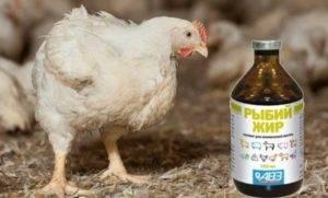 Польза рыбьего жира для кур-несушек и цыплят