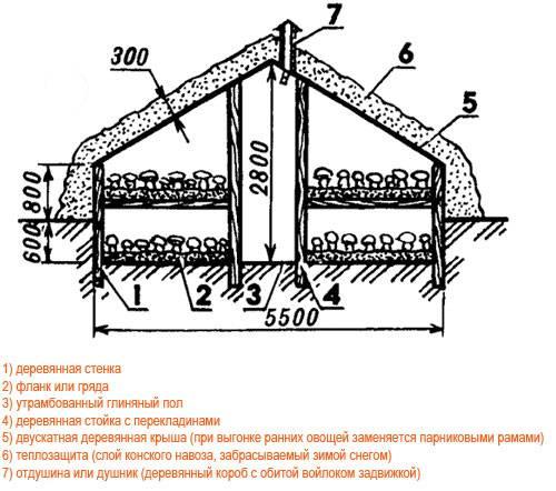 Белые грибы в домашних условиях - разведение и выращивание в промышленных масштабах (130 фото)