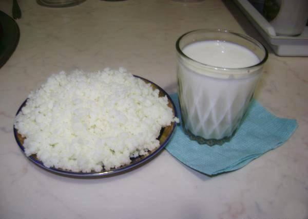Молочный гриб: как ухаживать и употреблять молочный гриб. полезные свойства