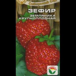 Описание сорта клубники Зефир — как поднять урожайность