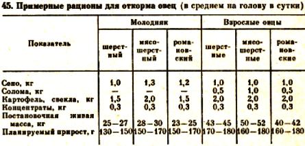 Содержание овец в зимний период: основные приготовления