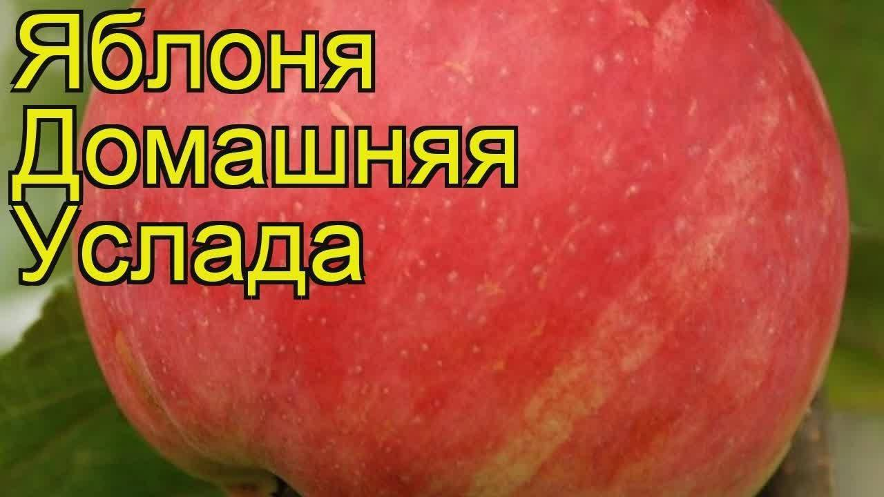 Отзывы о яблоне услада - описание сорта, особенности выращивания, правильный уход