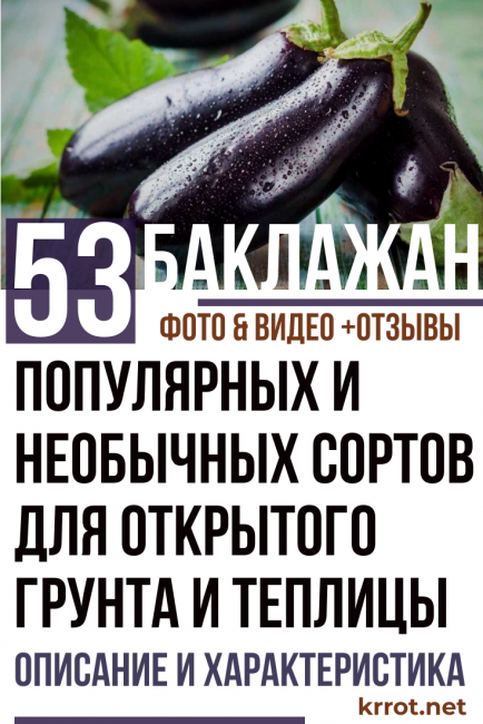 Сорт баклажан клоринда f1