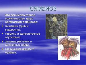 Симбиоз