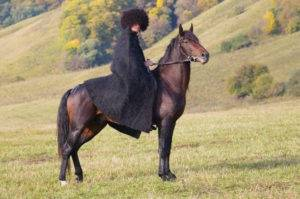 Лошади карачаевской породы: жеребец из кавказа, описание, характеристики