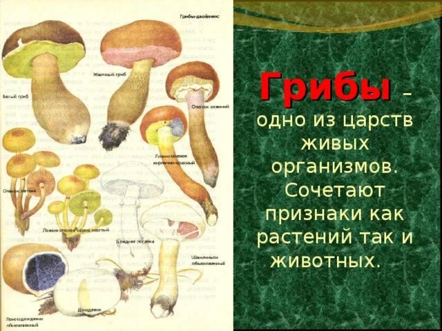 Виды грибов — фото, названия, описание, съедобные, условно съедобные и ядовитые. советы по определению вида (120 фото)