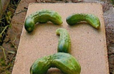 Пустоцвет на кабачках: что делать, если нет завязи, видео и фото