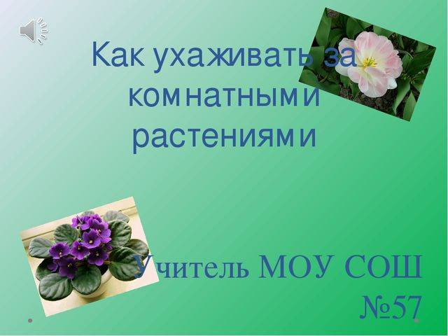 Как ухаживать за цветами - советы флориста начинающим любителям