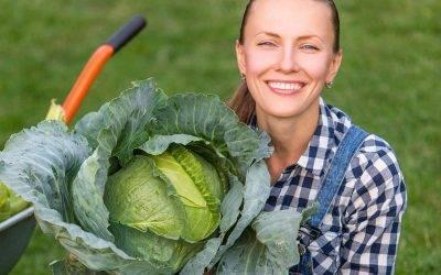 Чем и как обработать капусту от вредителей: виды опасных насекомых и методы борьбы с ними
