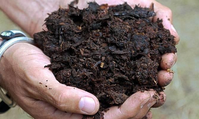Куриный помет как удобрение: как применять весной в качестве подкормки, как сделать настой и удобрять им огород, какие растения можно подкормить, отзывы