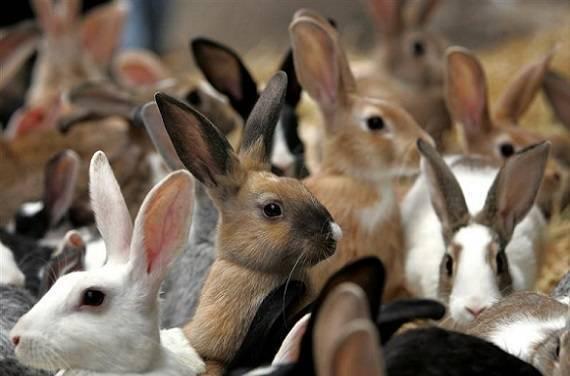 Бизнес план кролиководства: образец, экономическая часть, расчеты, пример для начинающих с нуля