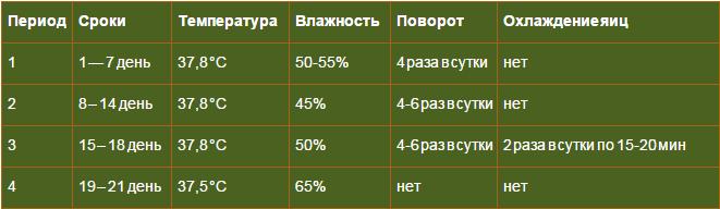 Индюшиные яйца: таблица режима инкубации, температура и влажность в домашних условиях