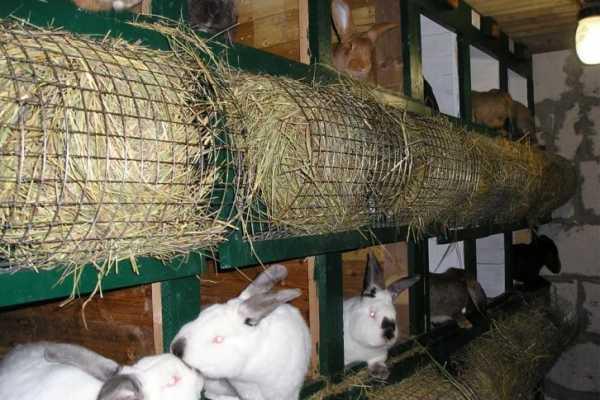 Сенная кормушка для кроликов: какие бывают и как сделать самому?