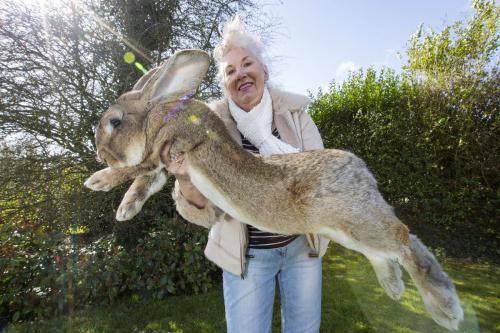 Крапива для кроликов: можно ли давать и как крапива для кроликов: можно ли давать и как