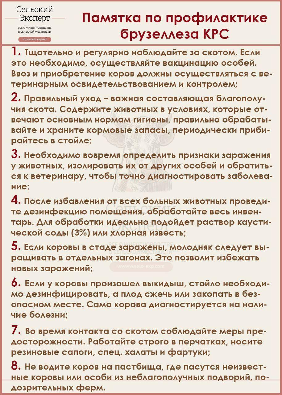 ᐉ бруцеллез крс (крупного рогатого скота) - описание болезни, пути передачи, симптомы, лечение, профилактика, опасность бруцеллеза крс для человека - zooon.ru