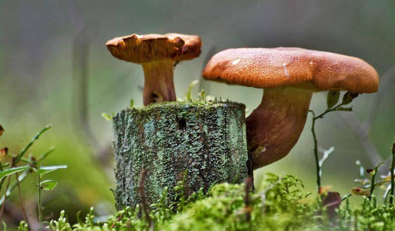 Древесные грибы: виды, польза и вред, применение