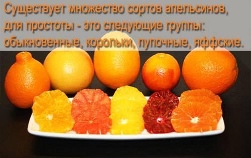 Витаминный и очень вкусный апельсин − как он может помочь любителям фастфуда?