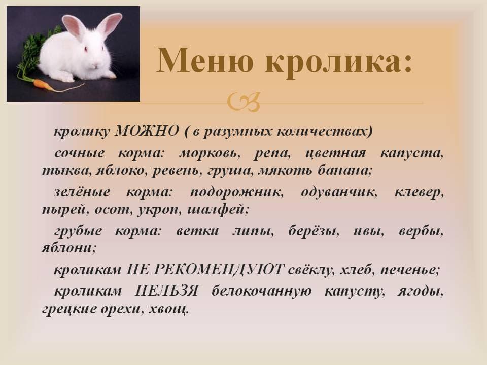 Можно ли кормить кроликов капустой? какую капусту можно давать?