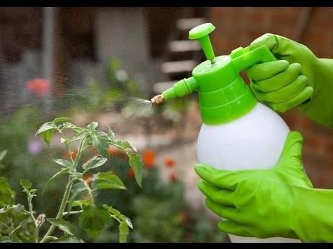 Мочевина как удобрение: применение на огороде, инструкция по применению (видео)