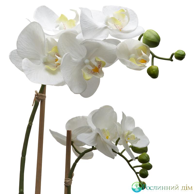 Лучшие сорта орхидей фаленопсис с фото и описанием