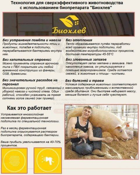 Уникальная технология содержания свиней на глубокой подстилке