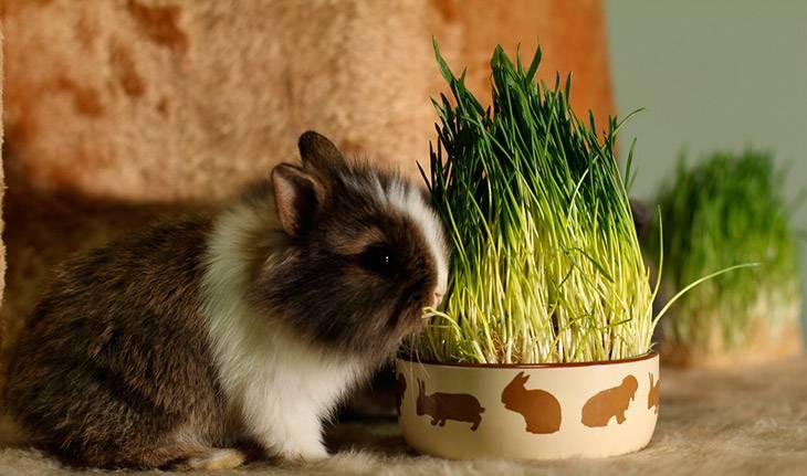 Витамины для кроликов разных пород: обзор добавок зимой и летом