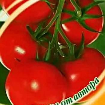 ✅ о томате самара: описание сорта, характеристики помидоров, посев - tehnomir32.ru