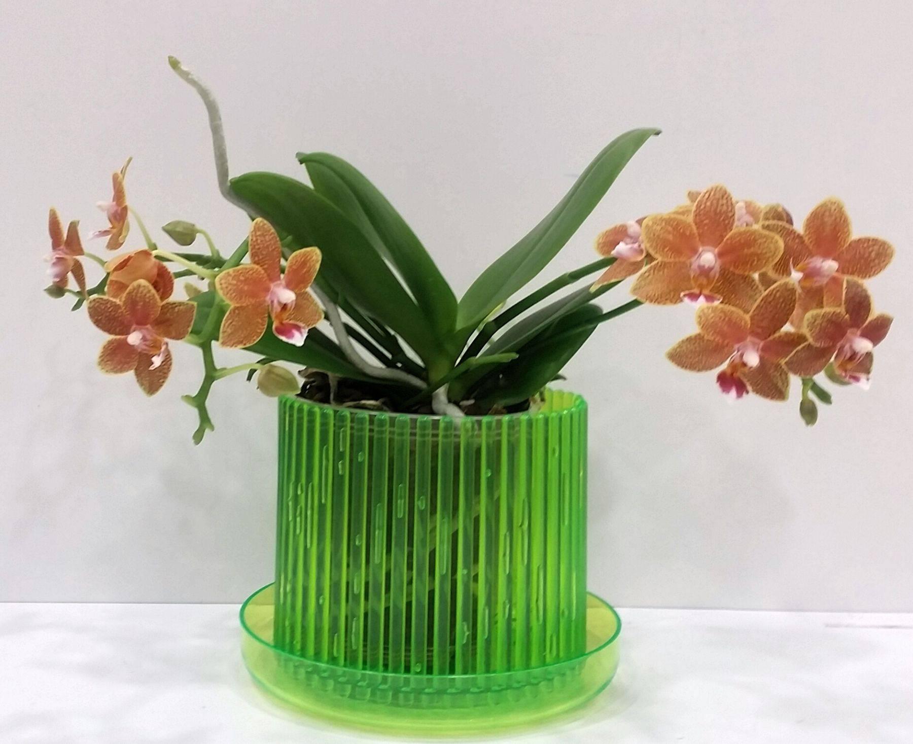 Кашпо для орхидей - какое должно быть: стеклянное (прозрачное), керамическое, подвесное или корзина сделанная своими руками и фото красивых вариантов
