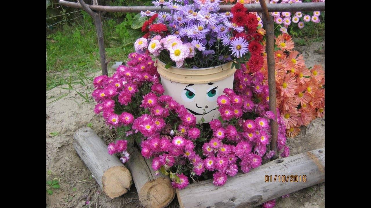 Хризантема шаровидная: выращивание и уход осенью, подготовка к зимовке, хранение зимой, отзывы