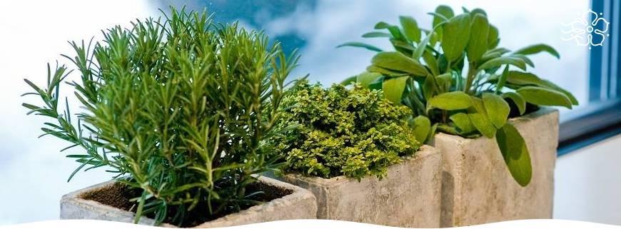 Зелень на подоконнике круглый год   красивый дом и сад