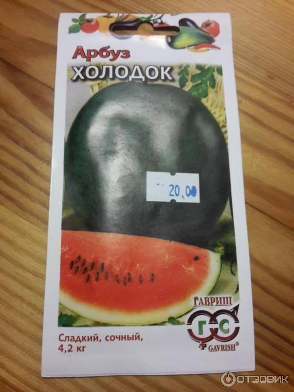 Сорт арбуза холодок: описание, особенности выращивания, фото