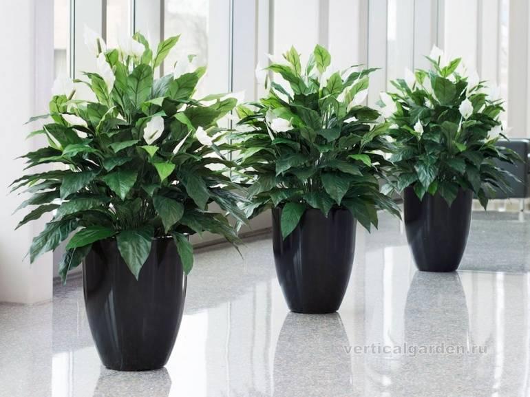 Неприхотливые комнатные растения фото и название. 25 растений, которые будут цвести до весны